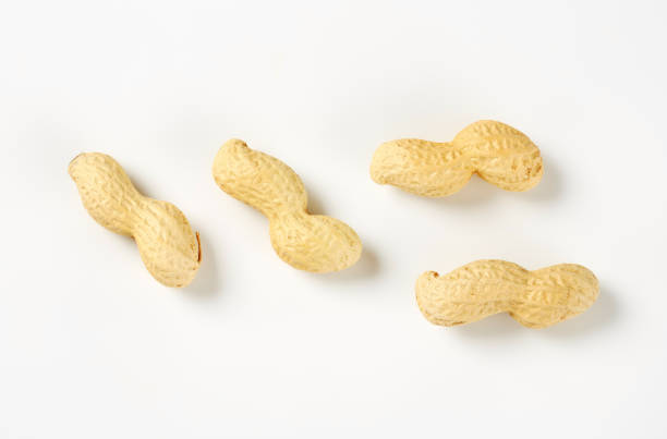 Raw peanuts in shell stock photo
