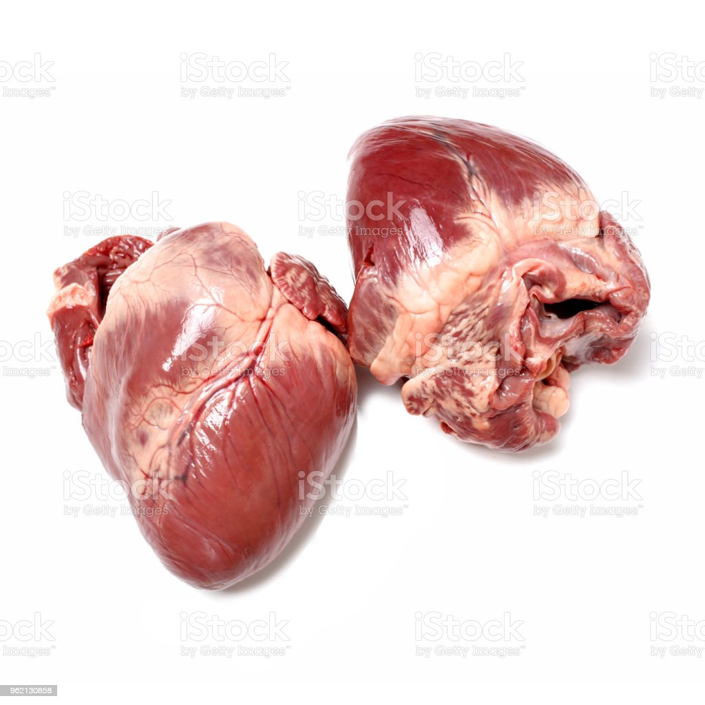 Raw Pig Heart Closeup Stock Photo & More Pictures of Anatomy | iStock