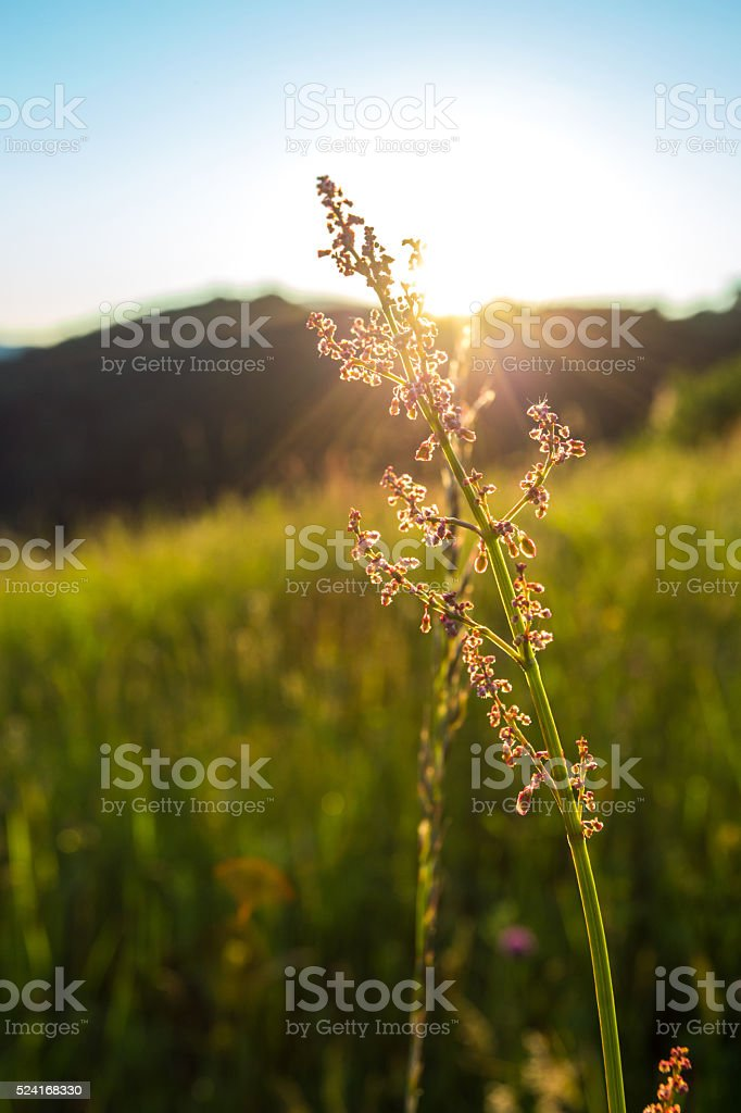raw plant in the ray of sunshine stock photo