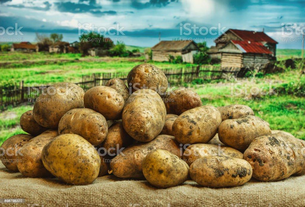 Raw potatoes amid the countryside stock photo