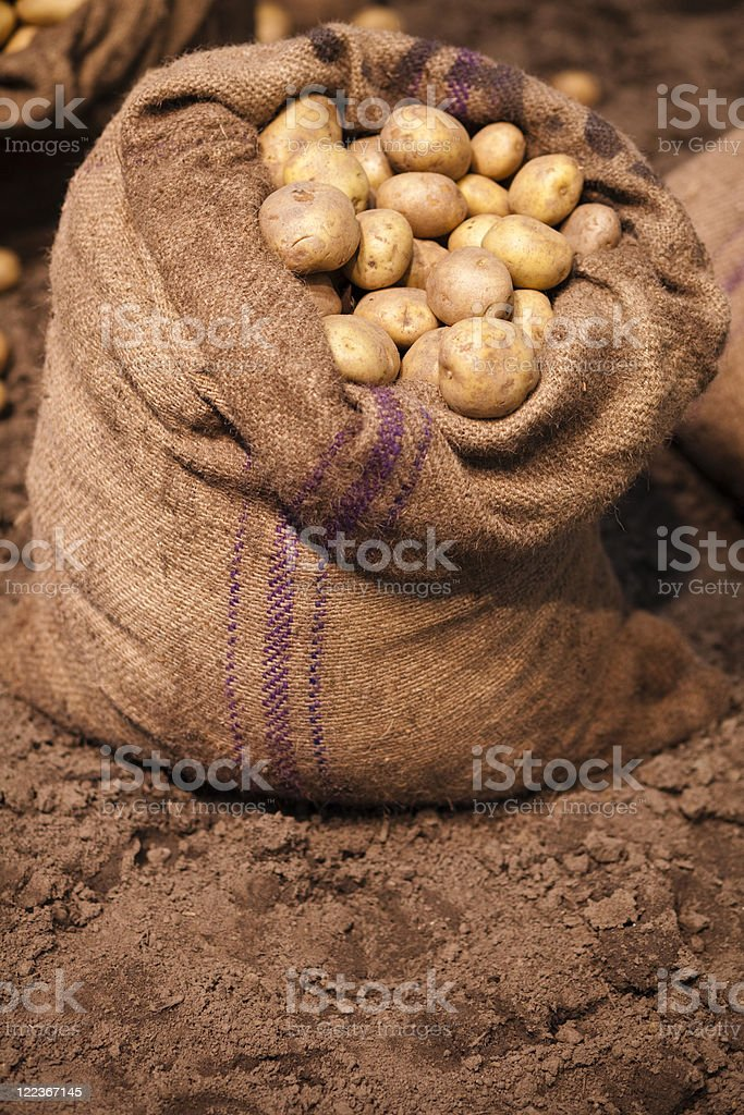Raw Potatoes royalty-free stock photo