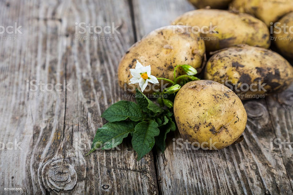 Raw potatoes with leaves photo libre de droits