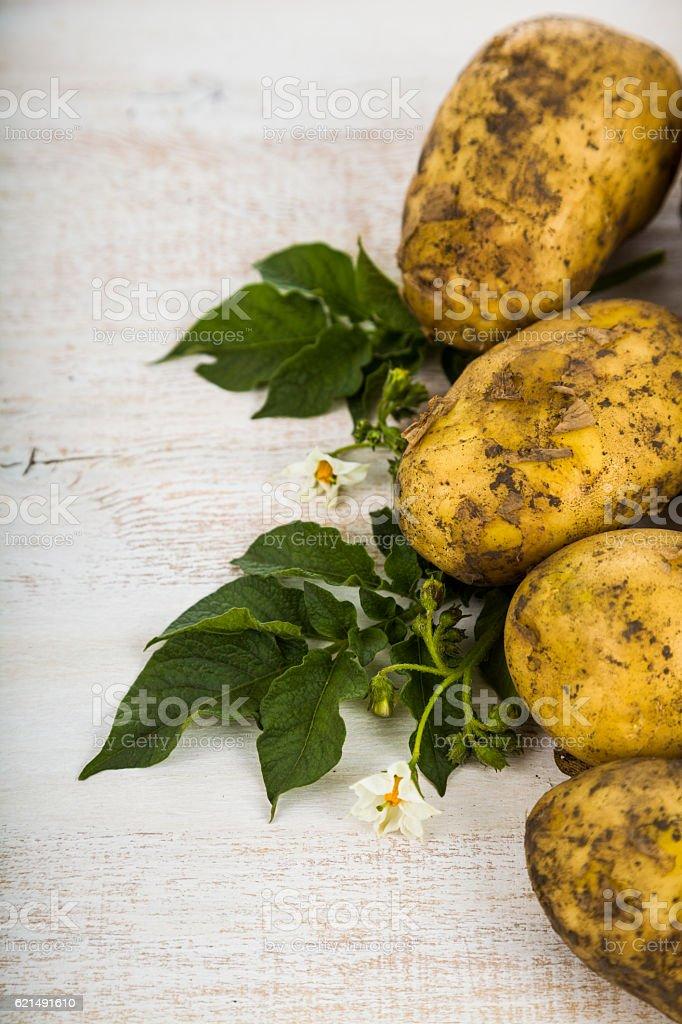 Raw potatoes with leaves photo libre de droits