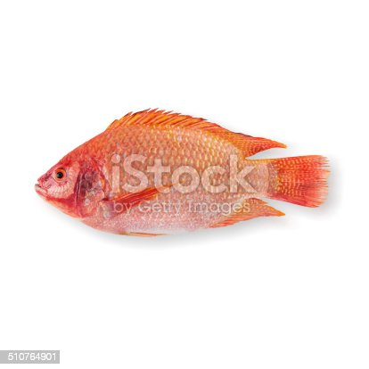Raw Red tilapia isolated on white background