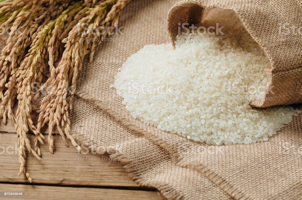 Raw rice grain and dry rice plant on wooden table stock photo