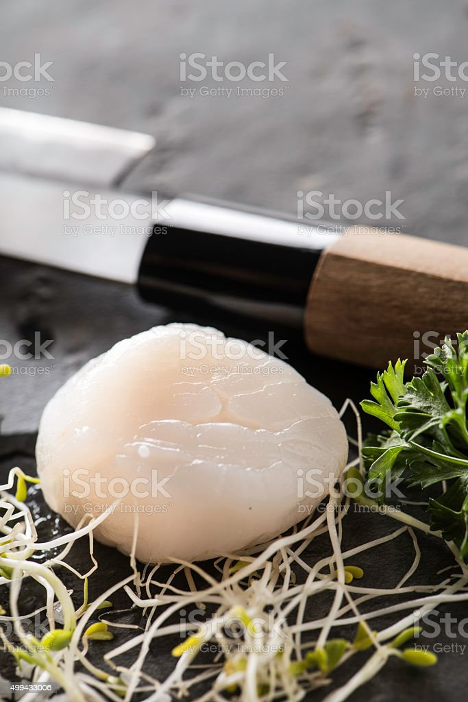 Raw Scallops stock photo