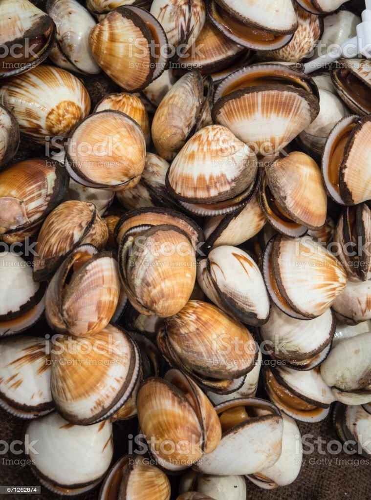 Raw Seafood :Fresh  Clams At Sushi Bar stock photo