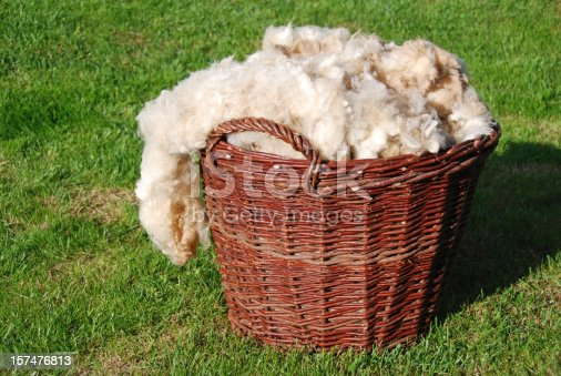 Basketful of raw sheep wool, unwashed and natural