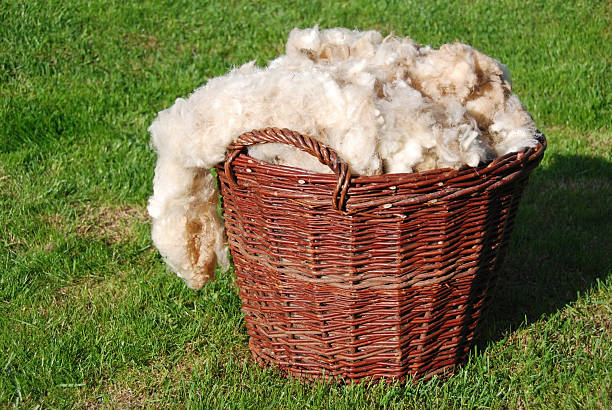 raw sheep wool - wool stock photos and pictures