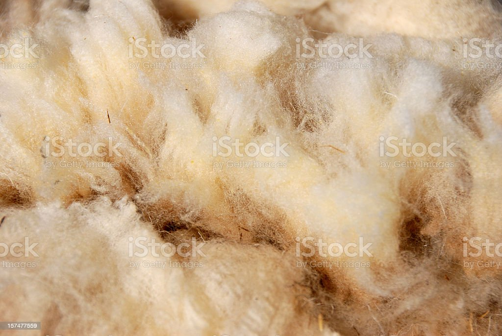 raw sheep wool stock photo