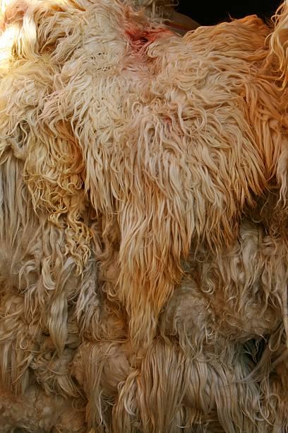 raw schafe wolle - lammfell stock-fotos und bilder