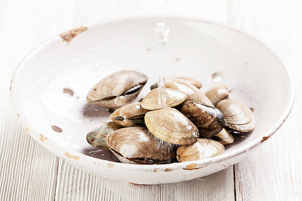 Raw Shells vongole stock photo