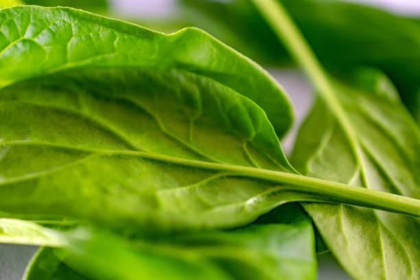 raw spinach leaf underside stock photo