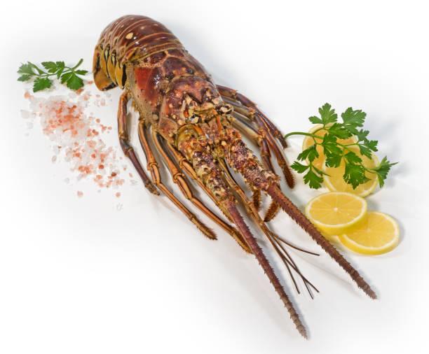 Raw Spiny Lobster stock photo