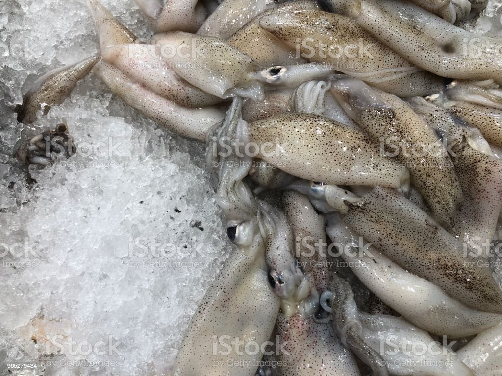 Raw squid on ice royalty-free stock photo