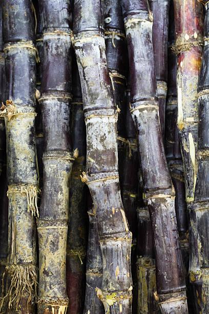 raw sugar cane - pengpeng stock-fotos und bilder
