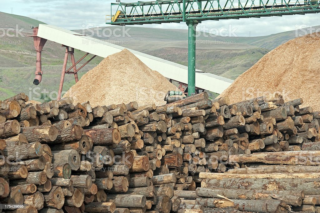 Raw timber and wood chips at lumber mill stock photo