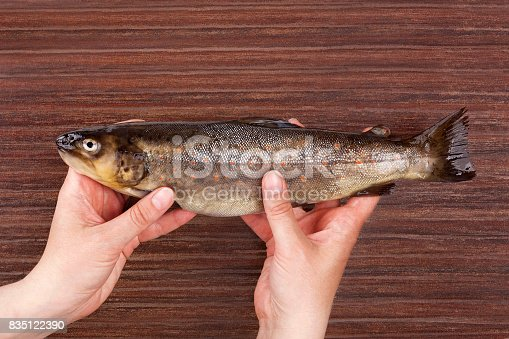 Raw trout fish holding in hands on brown table from above. Culinary seafood eating.