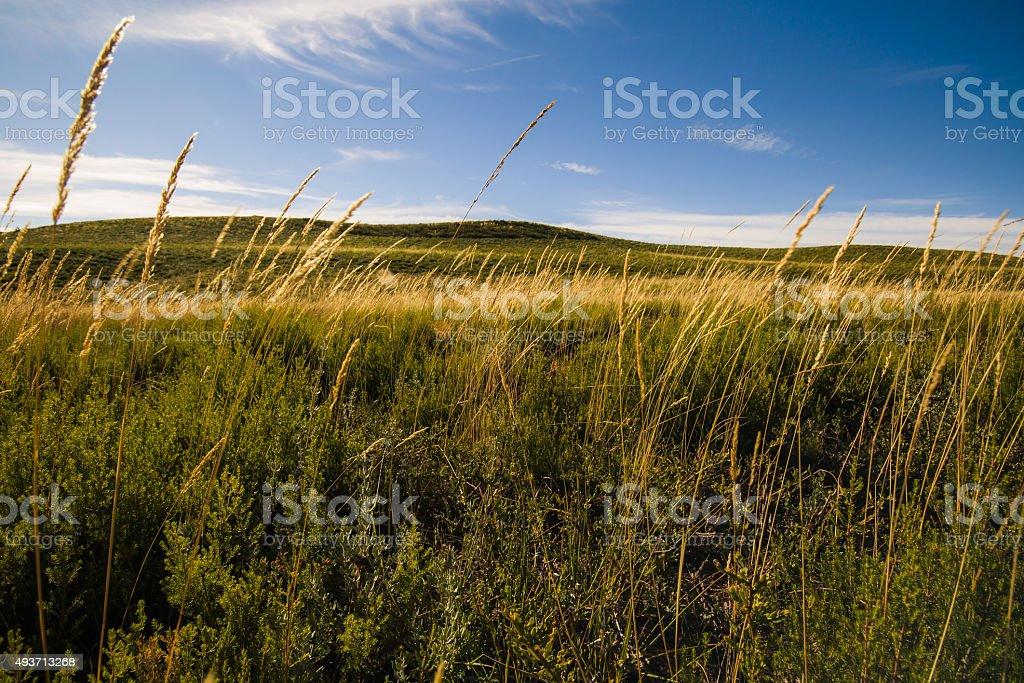 Ray Grass stock photo