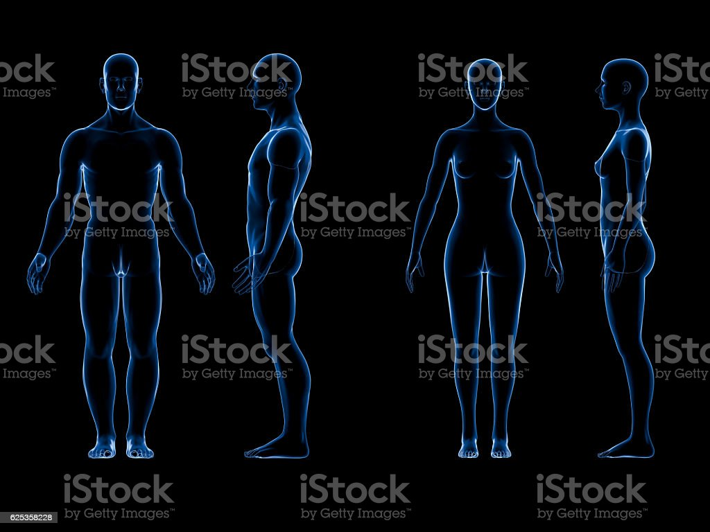 X Ray Human Male Female Body Anatomy Concept Isolate 3d Stock Photo ...