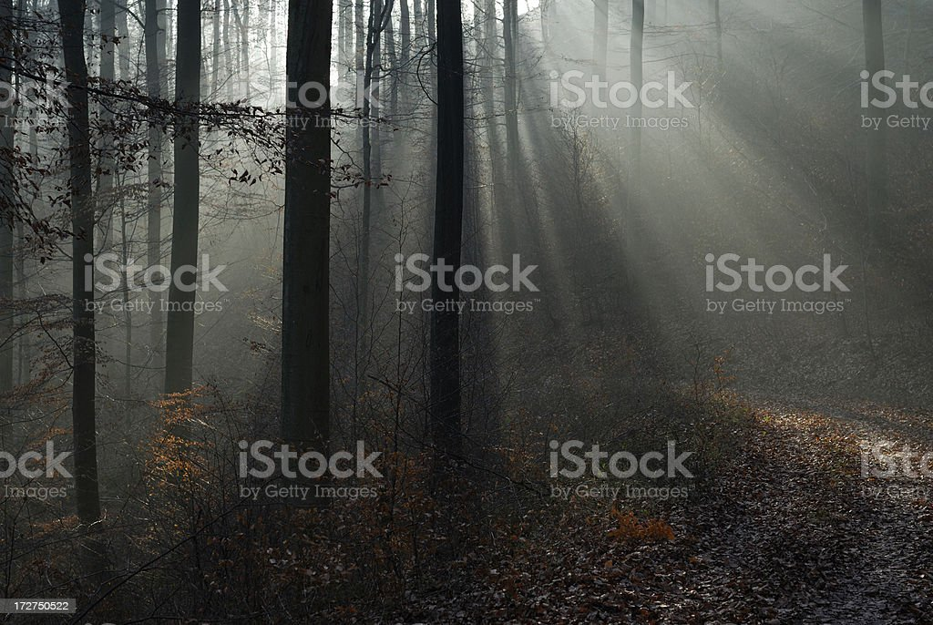 ray lights in the forest 02 royalty-free stock photo