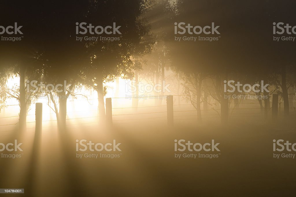 Ray of light beaming through foggy trees royalty-free stock photo