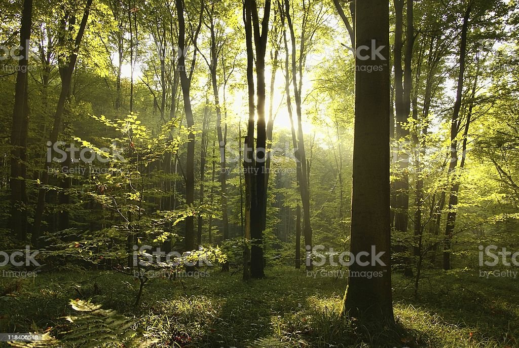 Ray of sunshine royalty-free stock photo