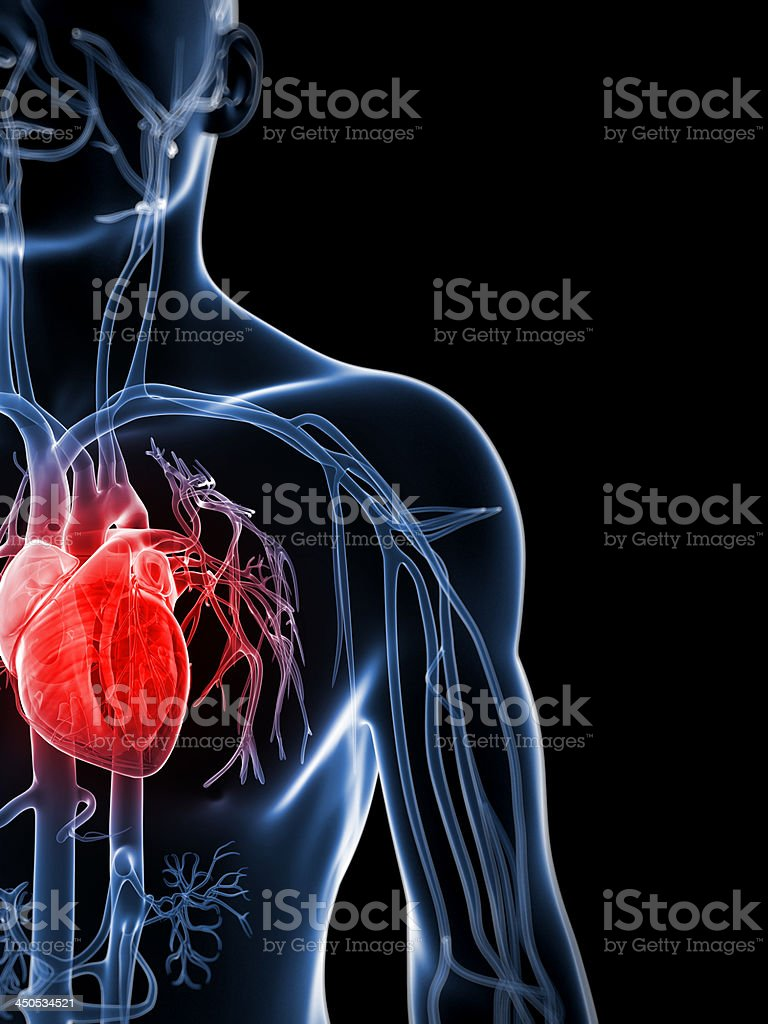 X Ray silhouette high lighting the human heart in red stock photo