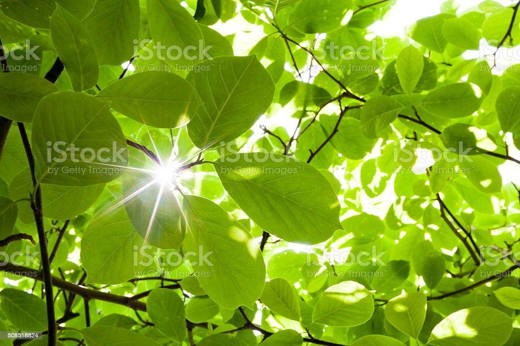 Ray a través de bosques exuberantes plantas - foto de stock