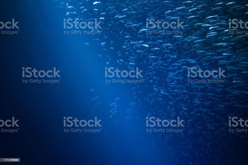 Rays of light deep into the marine sea stock photo