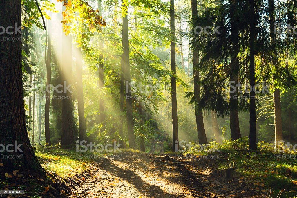 Rays of light stock photo