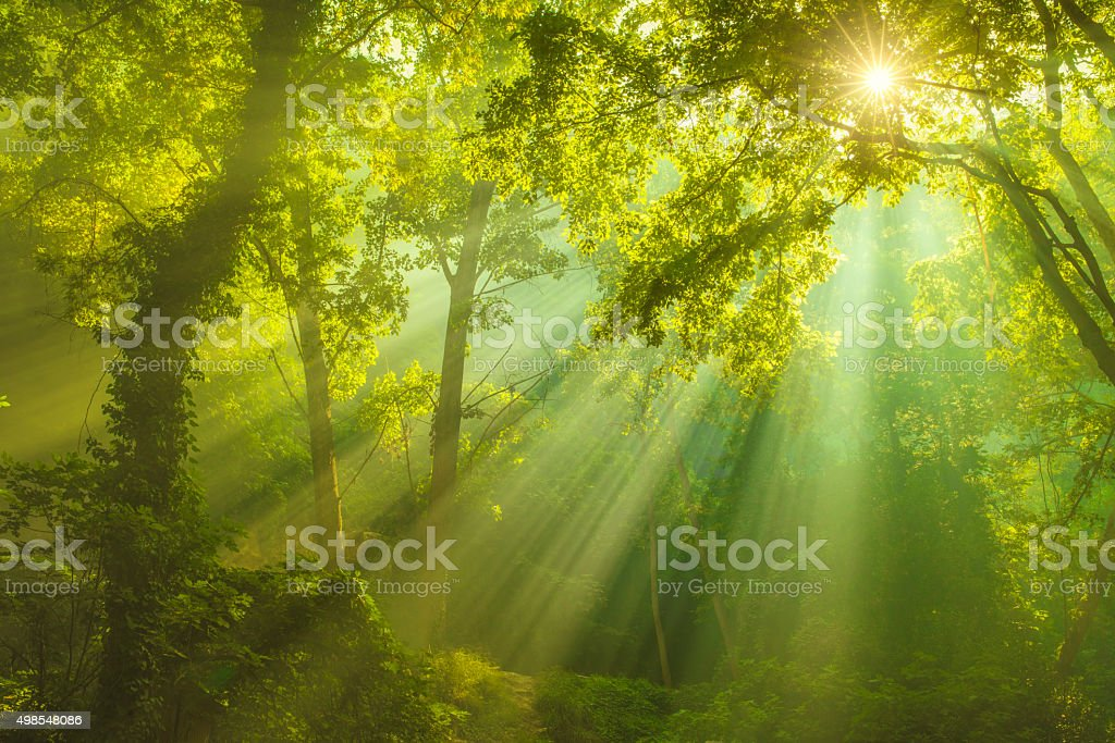 Rays of sunlight and Green Forest stock photo