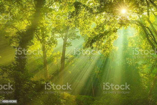 Photo of Rays of sunlight and Green Forest