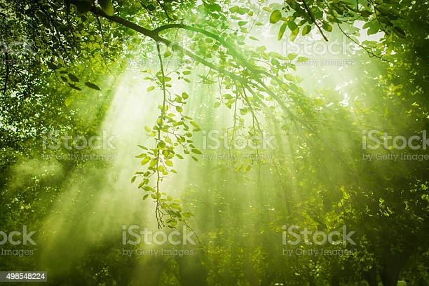 Rays of sunlight and green forest picture id498548224?b=1&k=6&m=498548224&s=612x612&h=bcsao q3fukv1zuwaxyjb2zhr0hlp6lsq25iq1lzsac=