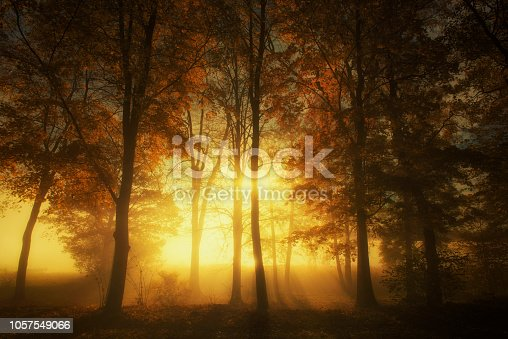 Rays of sunlight in a misty autumn forest from sweden nature