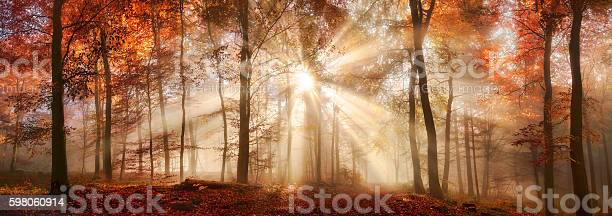 Rays of sunlight in a misty autumn forest picture id598060914?b=1&k=6&m=598060914&s=612x612&h=o0lp4xgiqkemuv0kccpnsj1t2p x9junin21nxjmwhm=