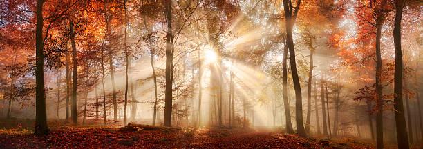 Rays of sunlight in a misty autumn forest picture id598060914?b=1&k=6&m=598060914&s=612x612&w=0&h=qrnsanix8b8myhe5 e5uxtrqpsmpbigsl71 mzyvsuo=
