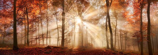 rays of sunlight in a misty autumn forest - trees in mist stock pictures, royalty-free photos & images