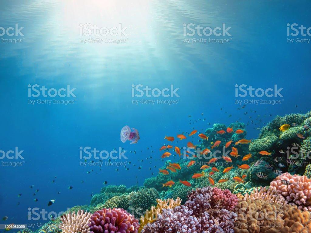 Rays of sunlight shining into sea, underwater view stock photo
