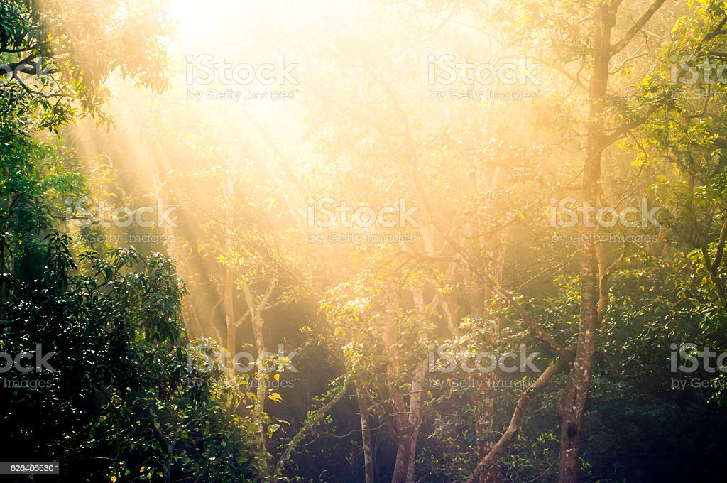 Rays of sunlight with trees stock photo