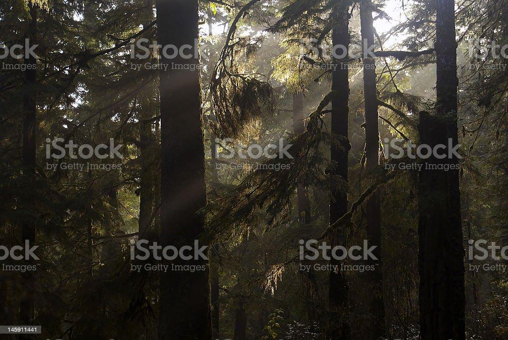 Rays of sunshine, shining through rainforest royalty-free stock photo