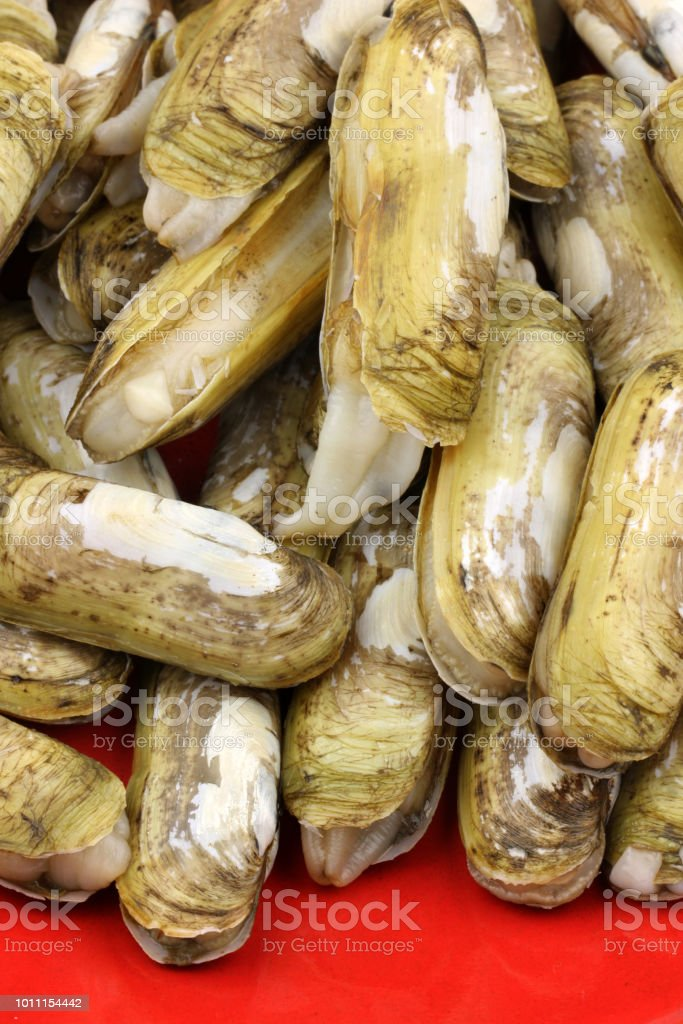 Razor Clams Isolated On White Background Stock Photo & More Pictures ...