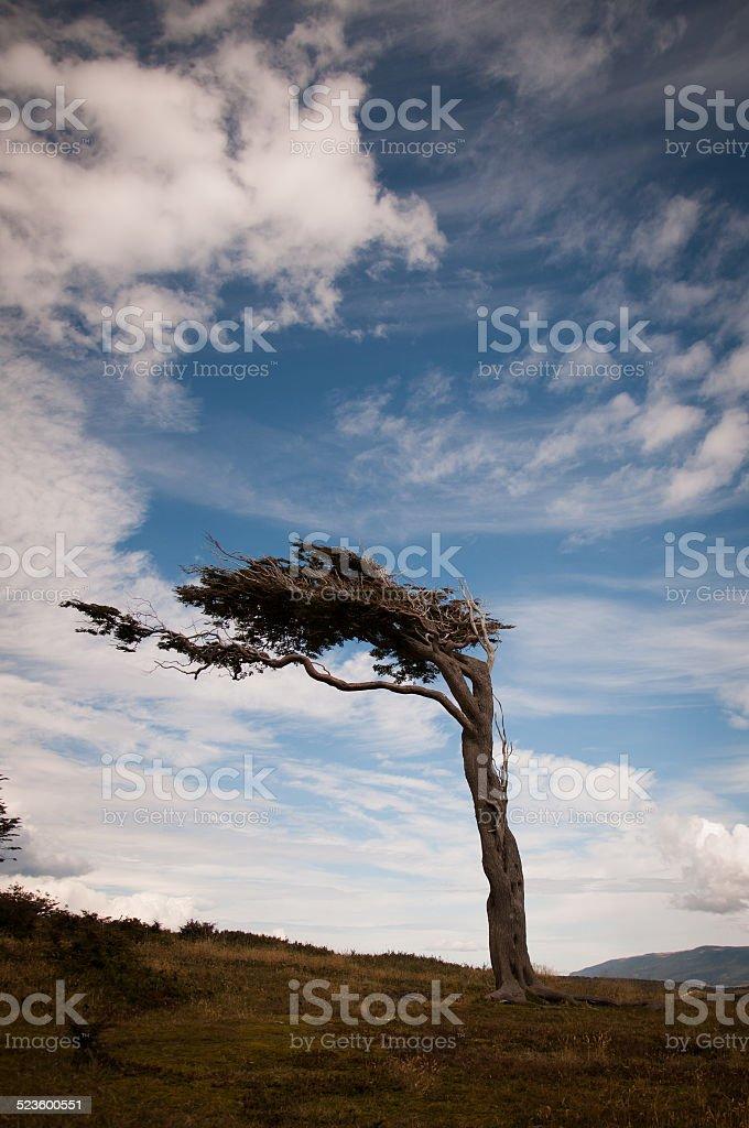 árbol bandera en ushuaia argetnina - foto de stock