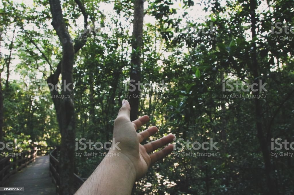Reach for your holiday dreams stock photo
