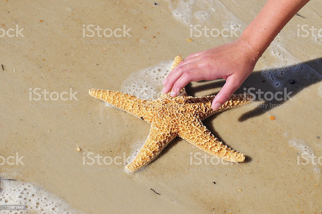Reaching for Seashell Series royalty-free stock photo