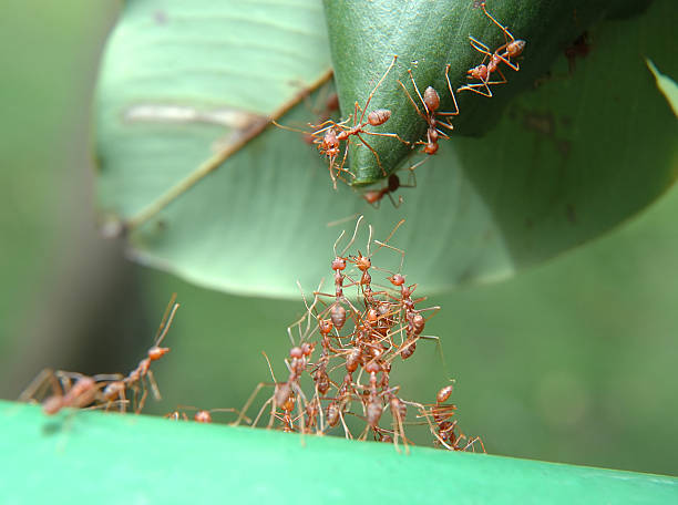reaching out - ants working together stock photos and pictures