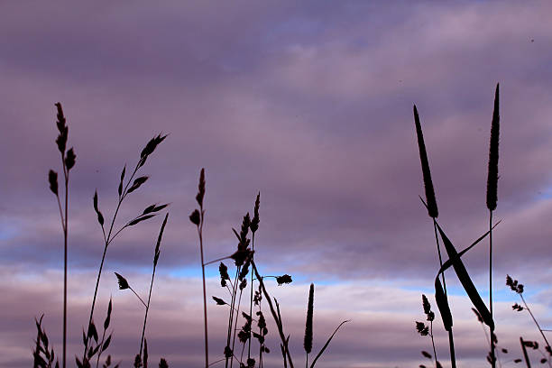 reaching meadow grass in derbyshire abjure stock pictures, royalty-free photos & images