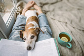istock Reading at home with pet. Cozy home weekend with interesting book, dog and hot tea. Beige and blue. Chilling mood 1132975333