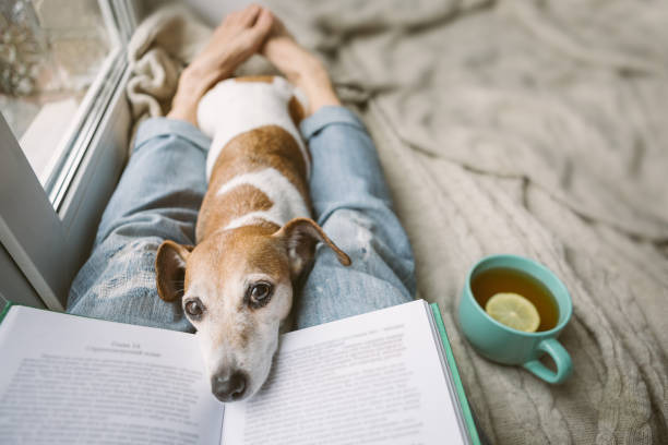 reading at home with pet. cozy home weekend with interesting book, dog and hot tea. beige and blue. chilling mood - happy dog imagens e fotografias de stock