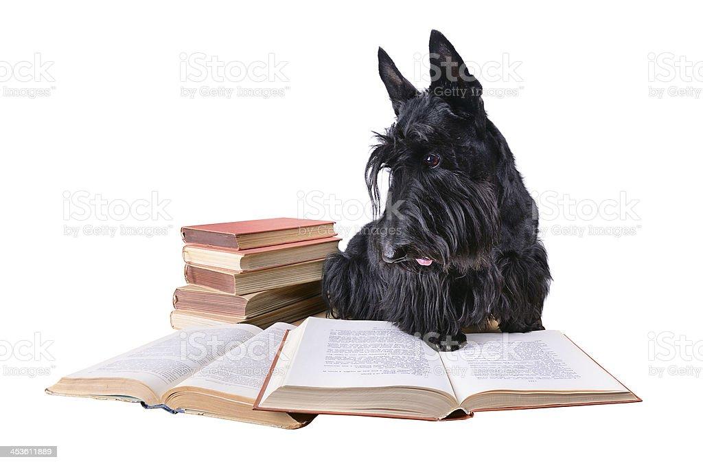 Reading dog royalty-free stock photo